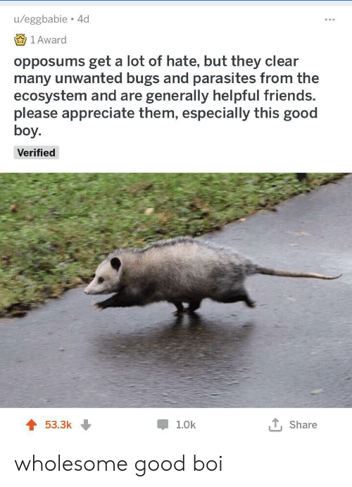 Friends, Appreciate, and Good: u/eggbabie 4d  1 Award  opposums get a lot of hate, but they clear  many unwanted bugs and parasites from the  ecosystem and are generally helpful friends.  please appreciate them, especially this good  boy.  Verified  53.3k  1.0k  Share wholesome good boi