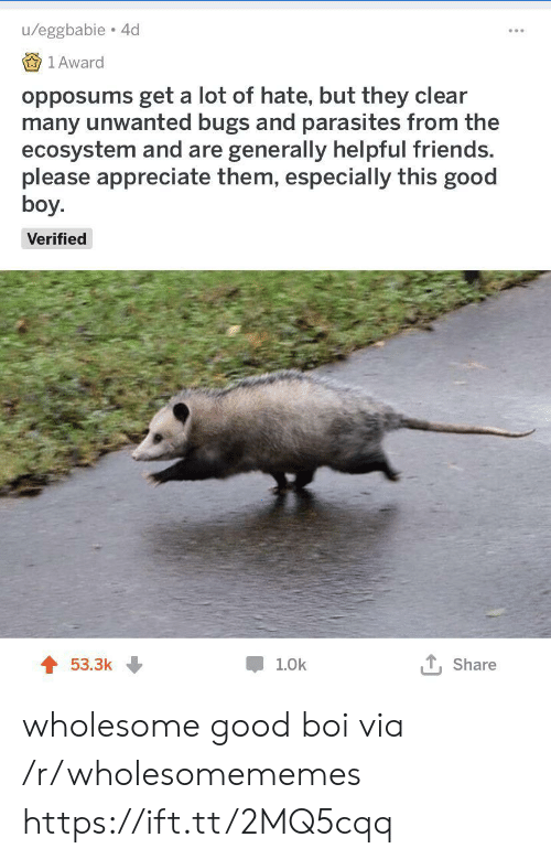 Friends, Appreciate, and Good: u/eggbabie 4d  1 Award  opposums get a lot of hate, but they clear  many unwanted bugs and parasites from the  ecosystem and are generally helpful friends.  please appreciate them, especially this good  boy.  Verified  T, Share  53.3k  1.0k wholesome good boi via /r/wholesomememes https://ift.tt/2MQ5cqq