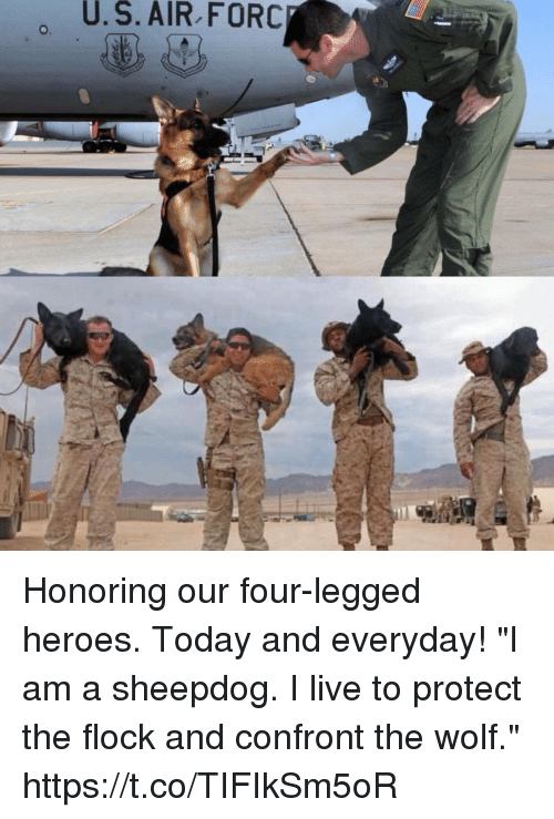 """sheepdog: U.  S.  AIR  FORC Honoring our four-legged heroes. Today and everyday! """"I am a sheepdog. I live to protect the flock and confront the wolf."""" https://t.co/TIFIkSm5oR"""