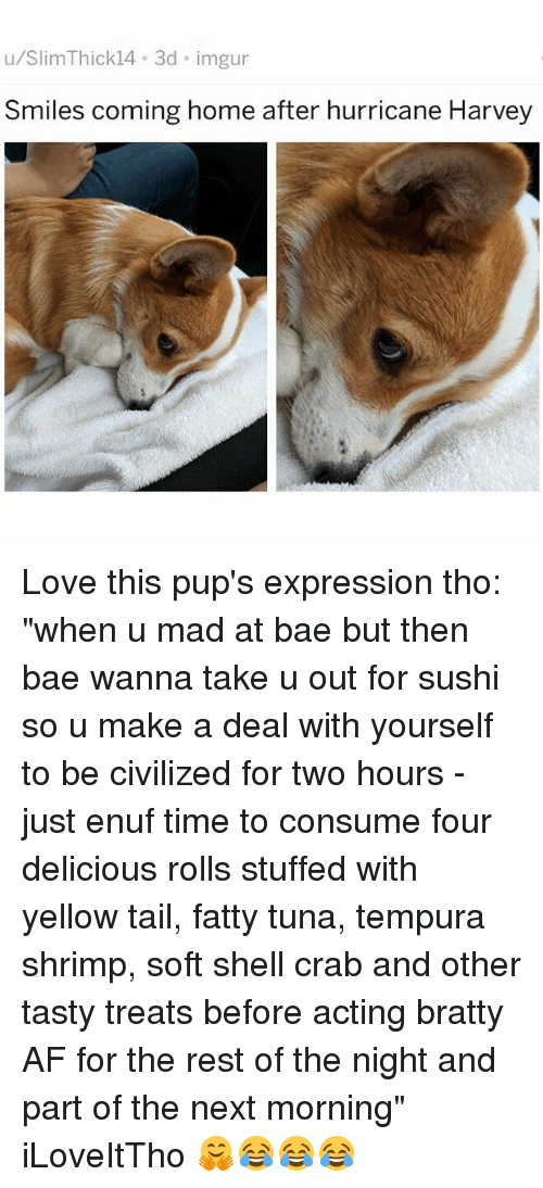 """restful: u/SlimThick14 3d imgur  Smiles coming home after hurricane Harvey Love this pup's expression tho: """"when u mad at bae but then bae wanna take u out for sushi so u make a deal with yourself to be civilized for two hours - just enuf time to consume four delicious rolls stuffed with yellow tail, fatty tuna, tempura shrimp, soft shell crab and other tasty treats before acting bratty AF for the rest of the night and part of the next morning"""" iLoveItTho 🤗😂😂😂"""