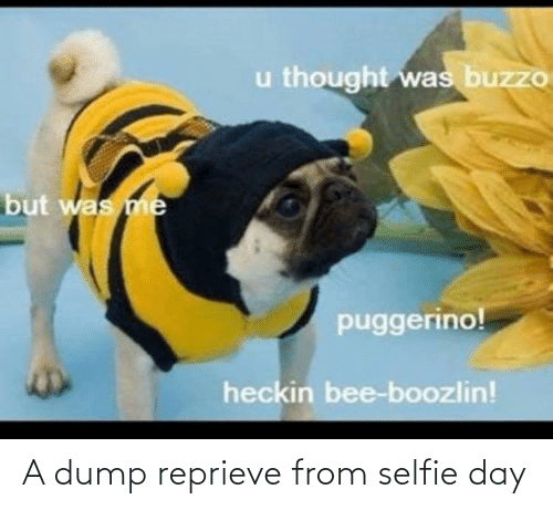 dump: u thought was buzzo  but was me  puggerino!  heckin bee-boozlin! A dump reprieve from selfie day