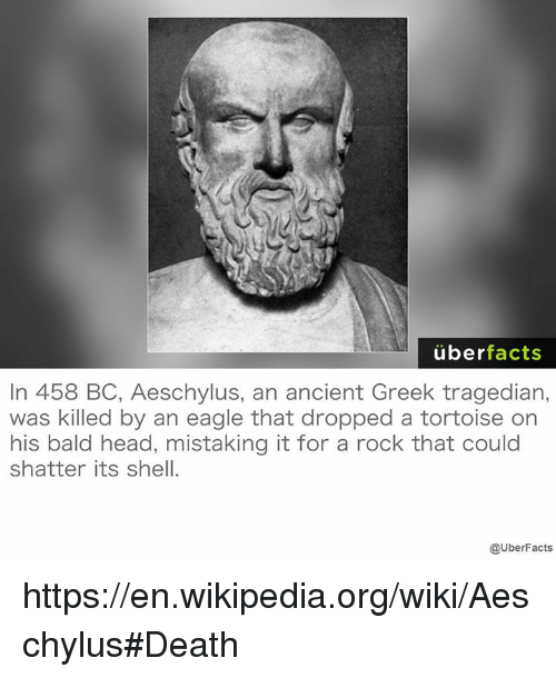 Bald Headed: uber  facts  In 458 BC, Aeschylus, an ancient Greek tragedian,  was killed by an eagle that dropped a tortoise on  his bald head, mistaking it for a rock that could  shatter its shell.  @UberFacts https://en.wikipedia.org/wiki/Aeschylus#Death