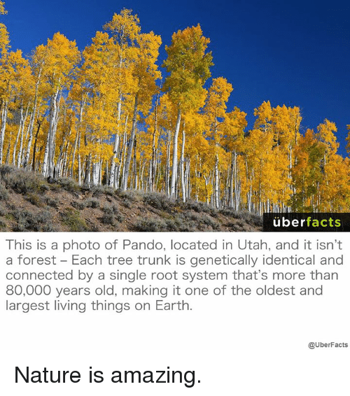 Amaz: uber  facts  This is a photo of Pando, located in Utah, and it isn't  a forest Each tree trunk is genetically identical and  connected by a single root system that's more than  80,000 years old, making it one of the oldest and  largest living things on Earth  @UberFacts Nature is amazing.