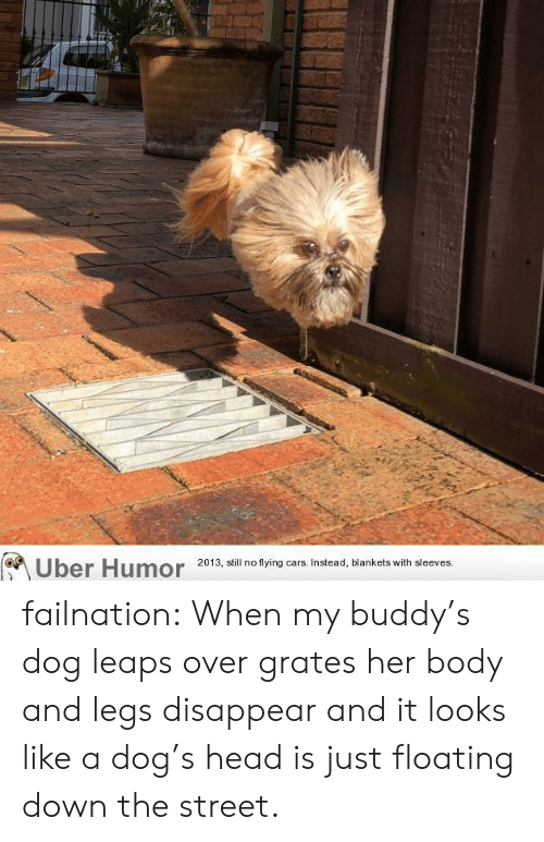 buddys: Uber Humor 20 3 ill no tying ars Instead, blankets with sleeves failnation:  When my buddy's dog leaps over grates her body and legs disappear and it looks like a dog's head is just floating down the street.