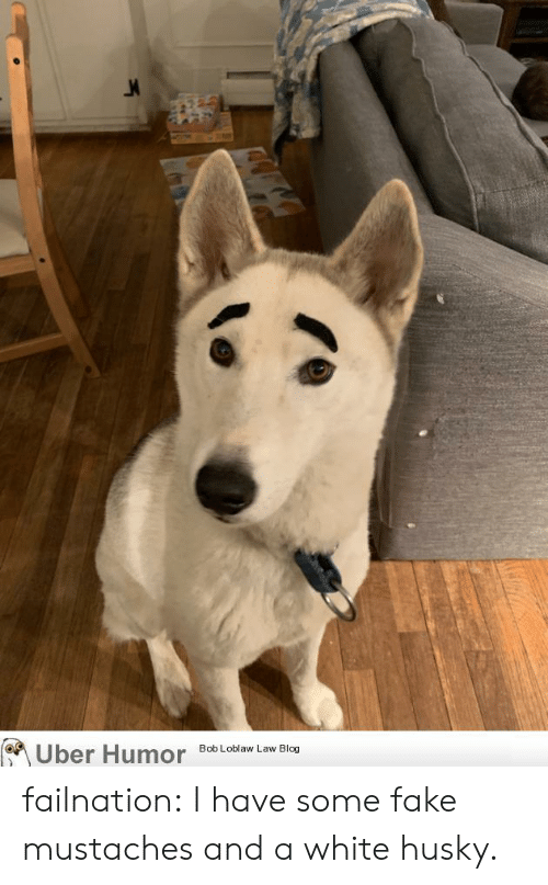 Fake, Tumblr, and Uber: Uber Humor  Bob Loblaw Law Blog failnation:  I have some fake mustaches and a white husky.