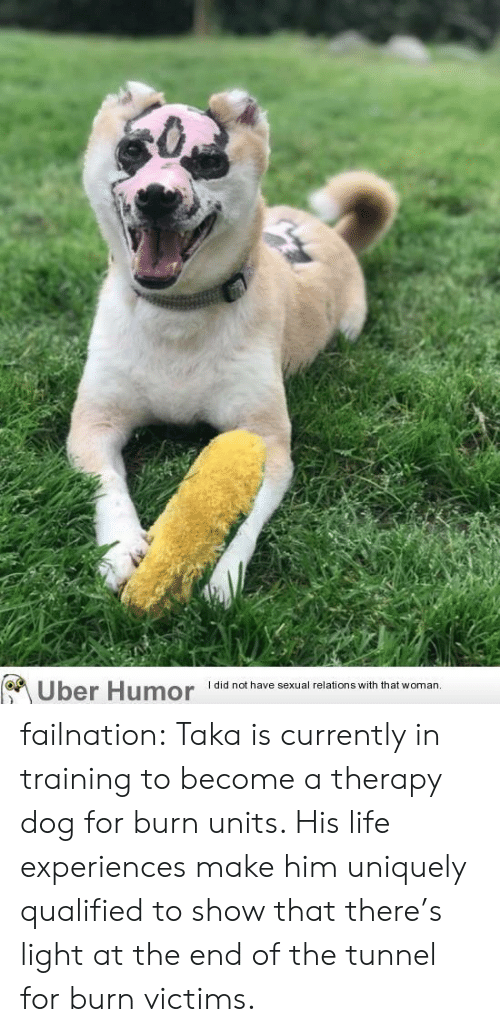 Qualified: Uber Humor  I did not have sexual relations with that woman.. failnation:  Taka is currently in training to become a therapy dog for burn units. His life experiences make him uniquely qualified to show that there's light at the end of the tunnel for burn victims.