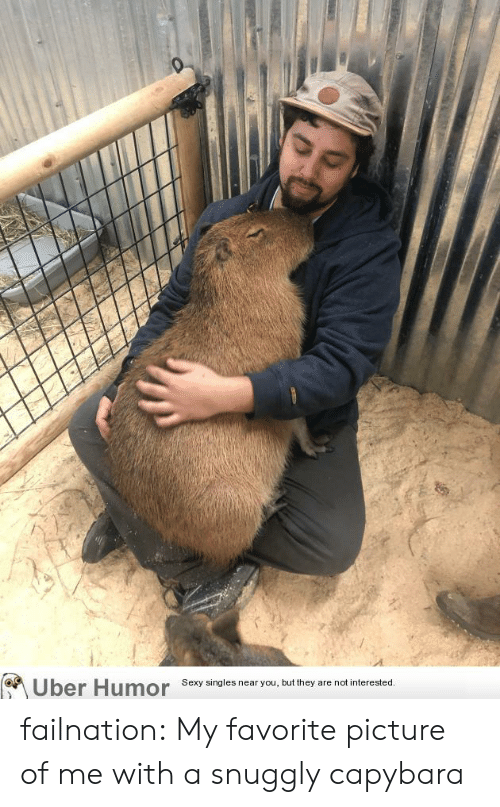 Sexy, Tumblr, and Uber: Uber Humor  Sexy singles near you, but they are not interested. failnation:  My favorite picture of me with a snuggly capybara
