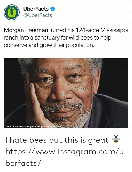 freeman: UberFacts  @UberFacts  Morgan Freeman turned his 124-acre Mississippi  ranch into a sanctuary for wild bees to help  conserve and grow their population  Credit: Reamronaldreagan/Wikipedia/CC BY SA 4.0 I hate bees but this is great 🐝  https://www.instagram.com/uberfacts/