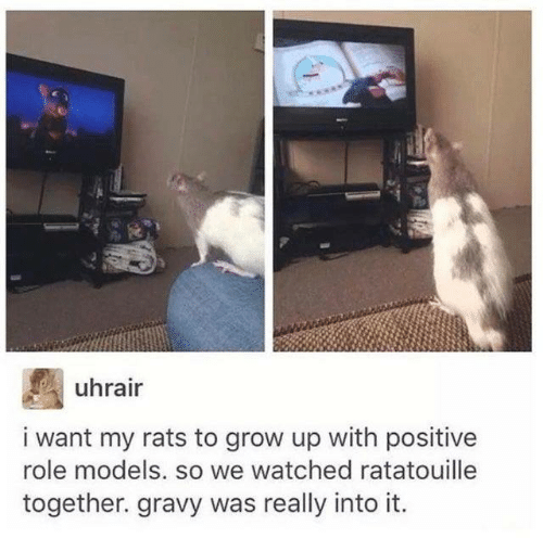 Dank, Ratatouille, and Models: uhrair  i want my rats to grow up with positive  role models. so we watched ratatouille  together. gravy was really into it.