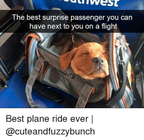 Memes, Best, and Flight: uiwest  The best surprise passenger you can  have next to you on a flight Best plane ride ever | @cuteandfuzzybunch