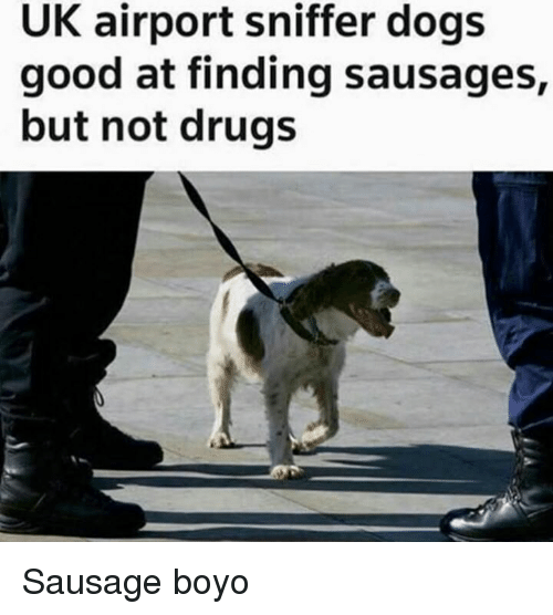 sausages: UK airport sniffer dogs  good at finding sausages,  but not drugs Sausage boyo