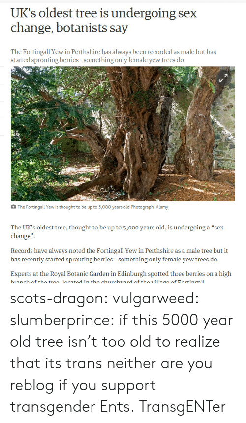 "Sex, Transgender, and Tumblr: UK's oldest tree is undergoing sex  change, botanists say  The Fortingall Yew in Perthshire has always been recorded as male but has  started sprouting berries-something only female yew trees do  The Fortingall Yew is thought to be up to 5,000 years old Photograph: Alamy  The UK's oldest tree, thought to be up to 5,000 years old, is undergoing a ""sex  change""  Records have always noted the Fortingall Yew in Perthshire as a male tree but it  has recently started sprouting berries - something only female yew trees do.  Experts at the Royal Botanic Garden in Edinburgh spotted three berries on a high  branch off the trae located in the churchvard of tho village of Fortinaall scots-dragon: vulgarweed:  slumberprince:  if this 5000 year old tree isn't too old to realize that its trans neither are you  reblog if you support transgender Ents.  TransgENTer"