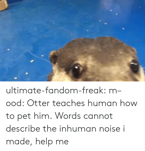 Mood, Tumblr, and Blog: ultimate-fandom-freak:  m–ood: Otter teaches human how to pet him. Words cannot describe the inhuman noise i made, help me