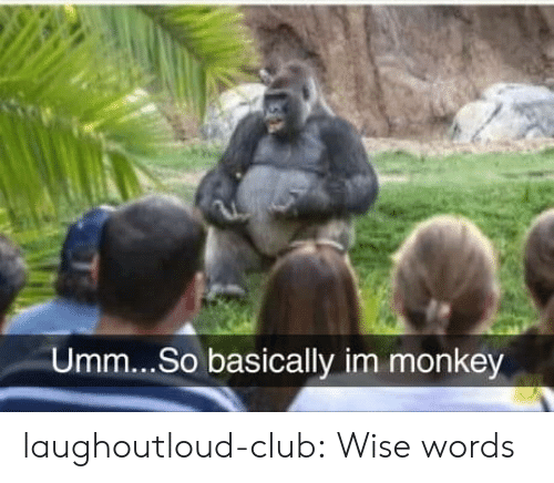 Club, Tumblr, and Blog: Umm...So basically im monkey laughoutloud-club:  Wise words