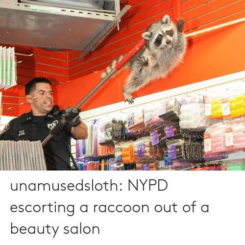 Nypd: unamusedsloth: NYPD escorting a raccoon out of a beauty salon