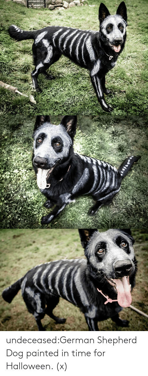 My Dog: undeceased:German Shepherd Dog painted in time for Halloween. (x)