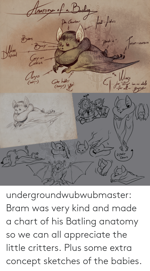 babies: undergroundwubwubmaster:  Bram was very kind and made a chart of his Batling anatomy so we can all appreciate the little critters. Plus some extra concept sketches of the babies.
