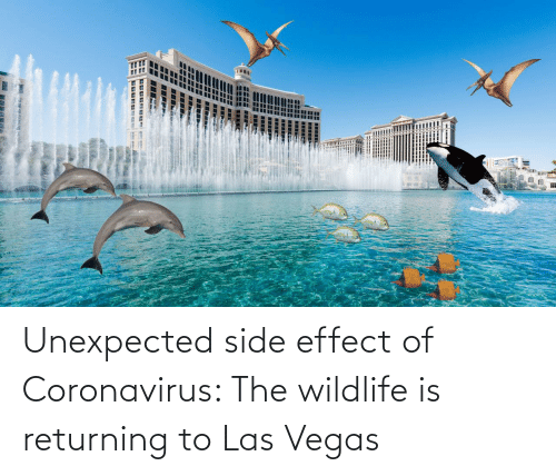 Returning: Unexpected side effect of Coronavirus: The wildlife is returning to Las Vegas
