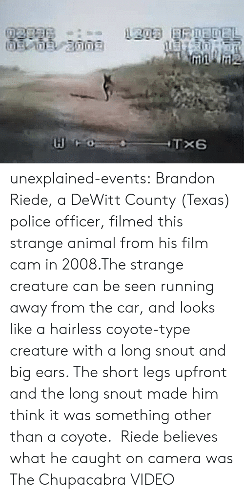 Police, Tumblr, and youtube.com: unexplained-events:   Brandon Riede, a DeWitt County (Texas) police officer, filmed this strange animal from his film cam in 2008.The strange creature can be seen running away from the car, and looks like a hairless coyote-type creature with a long snout and big ears. The short legs upfront and the long snout made him think it was something other than a coyote.  Riede believes what he caught on camera was The Chupacabra VIDEO