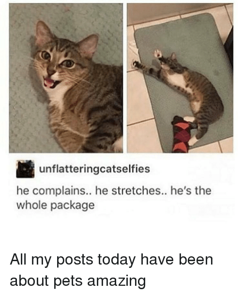 Amaz: Unflatteringoatselfies  he complains.. he stretches.. he's the  whole package All my posts today have been about pets amazing