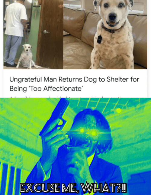 Dog, Shelter, and Man: Ungrateful Man Returns Dog to Shelter for  Being 'Too Affectionate'  EXCUSE ME. WHAT?!