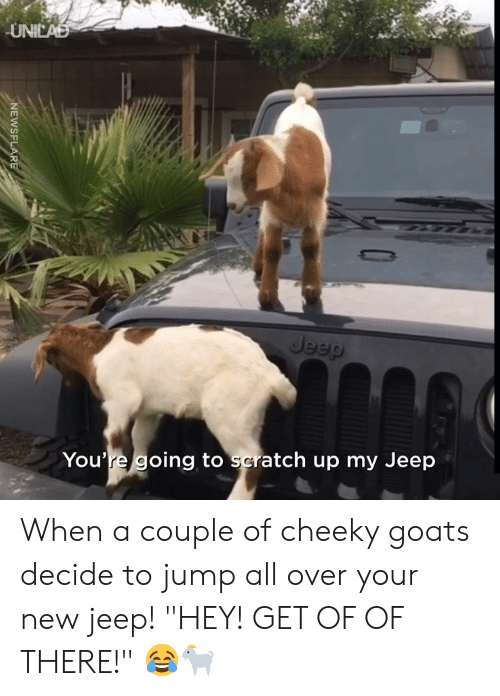 "goats: UNICAD  Jeep  You're going to scratch up my Jeep  NEWSFLARE When a couple of cheeky goats decide to jump all over your new jeep! ""HEY! GET OF OF THERE!"" 😂🐐"
