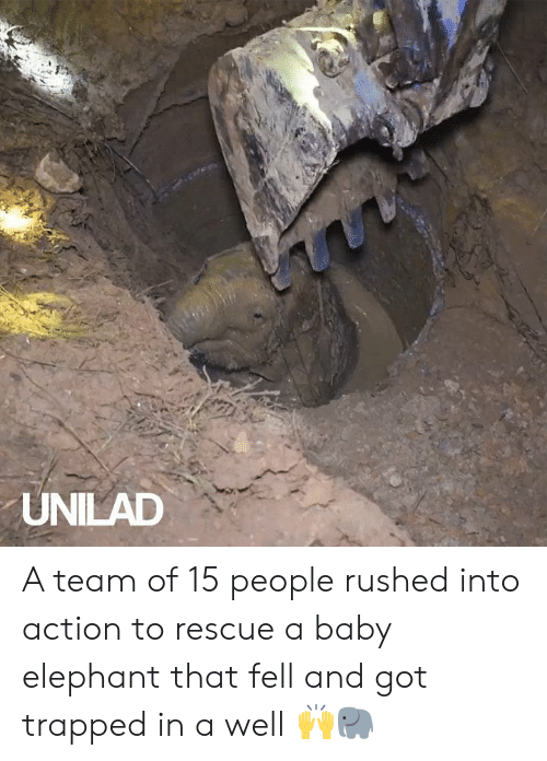 a team: UNILAD A team of 15 people rushed into action to rescue a baby elephant that fell and got trapped in a well 🙌🐘