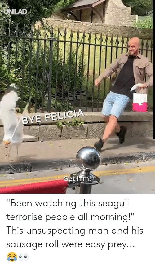 """sausage: UNILAD  BYE FELICIA  Get him! """"Been watching this seagull terrorise people all morning!"""" This unsuspecting man and his sausage roll were easy prey... 😂👀"""
