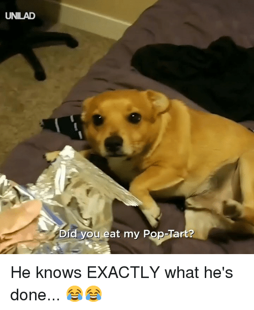 pop tart: UNILAD  Did you eat my Pop-Tart? He knows EXACTLY what he's done... 😂😂