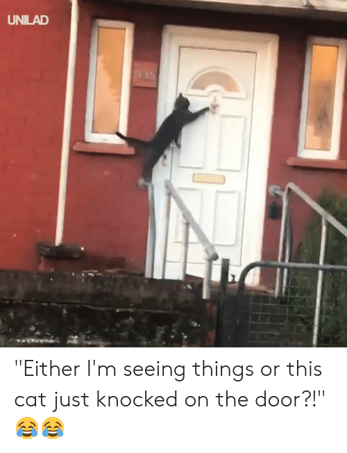 "Dank, 🤖, and Cat: UNILAD ""Either I'm seeing things or this cat just knocked on the door?!"" 😂😂"