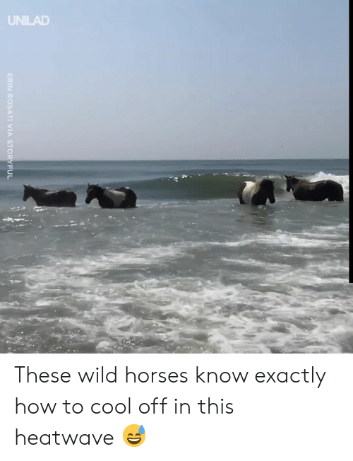 Dank, Horses, and Cool: UNILAD  ERIN ROSATI VIA STORYFUL These wild horses know exactly how to cool off in this heatwave 😅