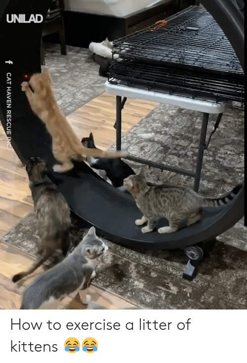Dank, Exercise, and How To: UNILAD  f CAT HAVEN RESCUE INC How to exercise a litter of kittens 😂😂