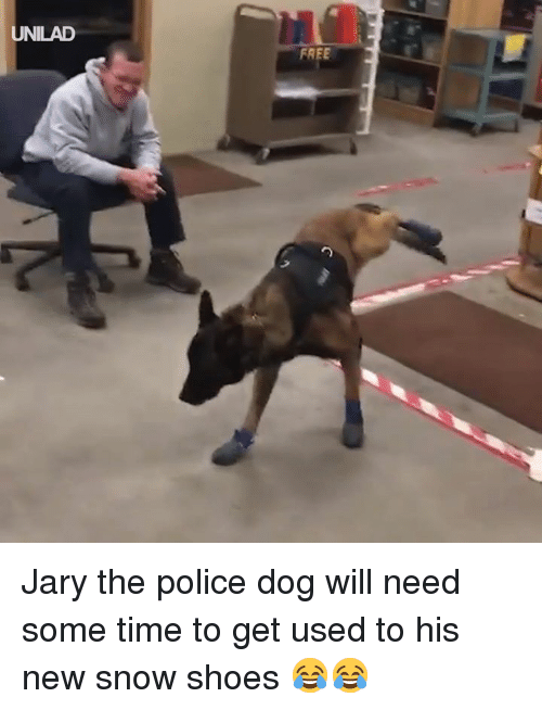Dank, Police, and Shoes: UNILAD  FREE Jary the police dog will need some time to get used to his new snow shoes 😂😂