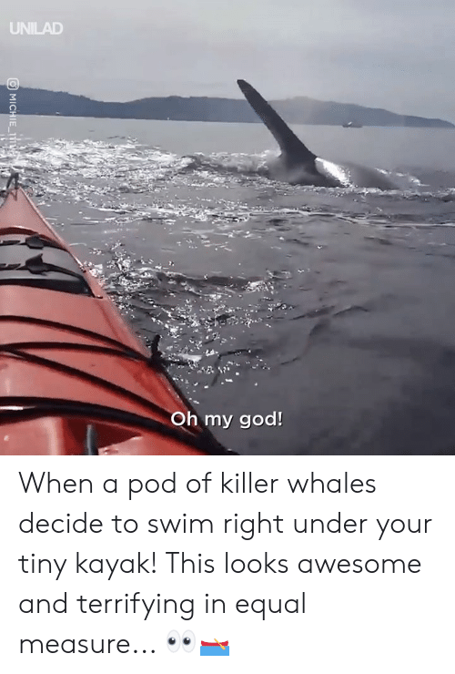 Kayak: UNILAD  Oh my god! When a pod of killer whales decide to swim right under your tiny kayak! This looks awesome and terrifying in equal measure... 👀🛶