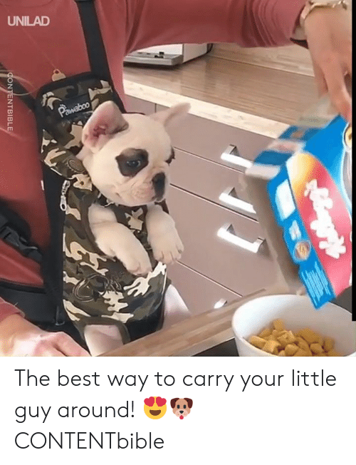 Your Little: UNILAD  Pawaboo  CONTENTBIBLE The best way to carry your little guy around! 😍🐶   CONTENTbible