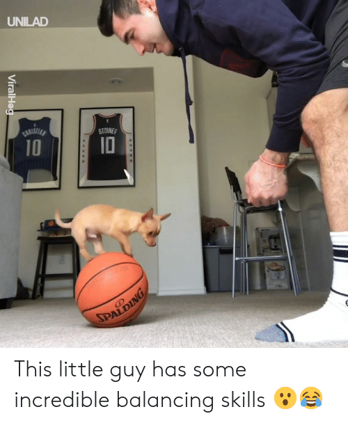 Dank, 🤖, and Incredible: UNILAD  STOINE  10  ID This little guy has some incredible balancing skills 😮😂