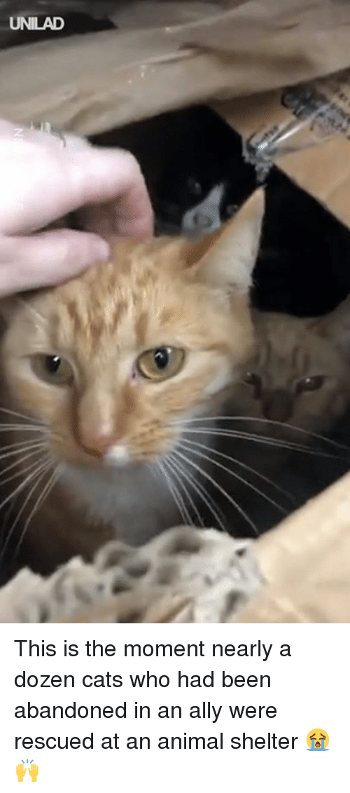 Cats, Dank, and Ally: UNILAD This is the moment nearly a dozen cats who had been abandoned in an ally were rescued at an animal shelter 😭🙌