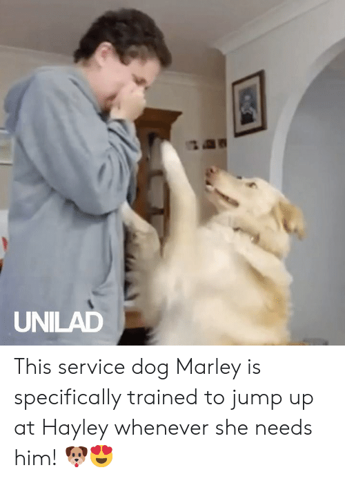 Jump Up: UNILAD This service dog Marley is specifically trained to jump up at Hayley whenever she needs him! 🐶😍