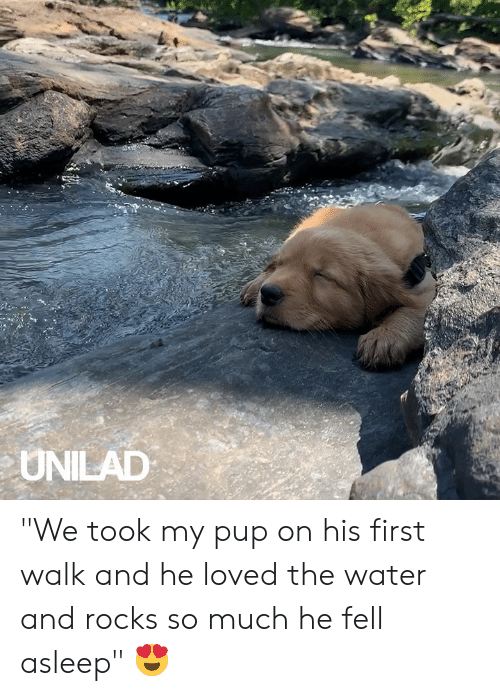 "Dank, Water, and Pup: UNILAD ""We took my pup on his first walk and he loved the water and rocks so much he fell asleep"" 😍"