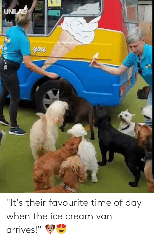 """Dank, Ice Cream, and Time: UNILAD  you  NEWSFLARE """"It's their favourite time of day when the ice cream van arrives!"""" 🐶😍"""