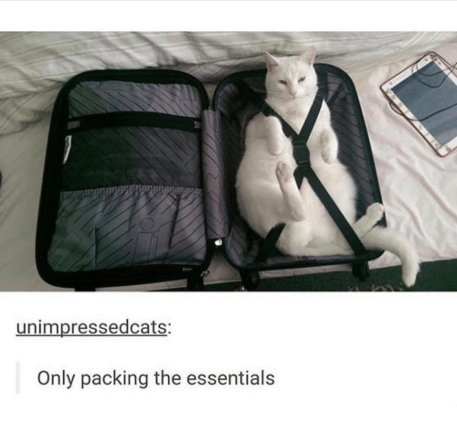 essentials: unimpressedcats:  Only packing the essentials