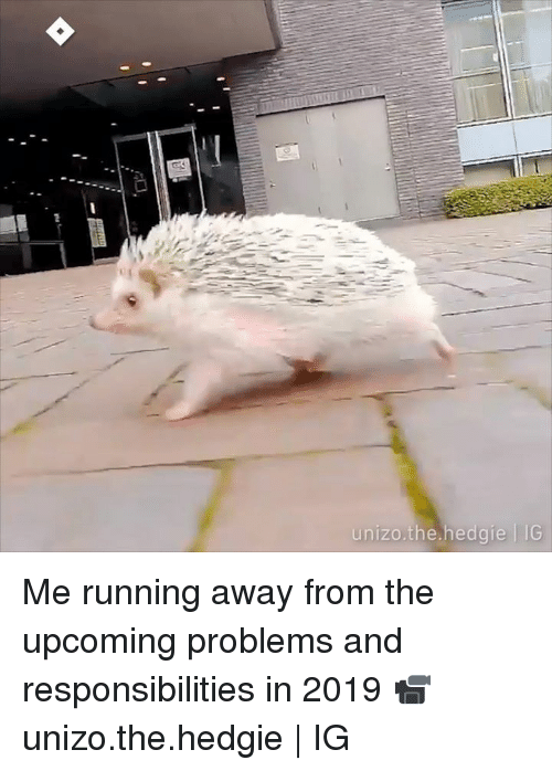 Dank, Running, and 🤖: unizo.the.hedgie IG  nizo.the.hedgie TG Me running away from the upcoming problems and responsibilities in 2019  📹 unizo.the.hedgie | IG