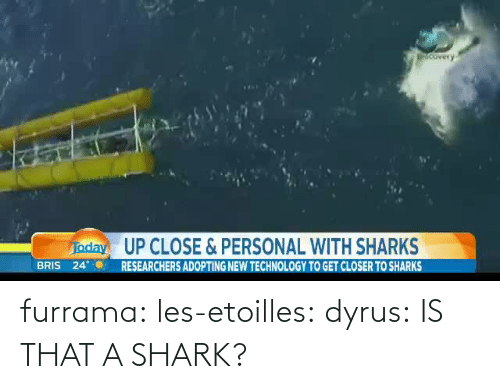 Adopting: UP CLOSE&PERSONAL WITH SHARKS  BRIS 24RESEARCHERS ADOPTING NEW TECHNOLOGY TO GET CLOSER TO SHARKS furrama:  les-etoilles:  dyrus:  IS THAT A SHARK?