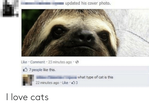 cover photo: updated his cover photo.  Like · Comment  23 minutes ago  O 7 people like this.  i what type of cat is this  22 minutes ago Like 3 I love cats