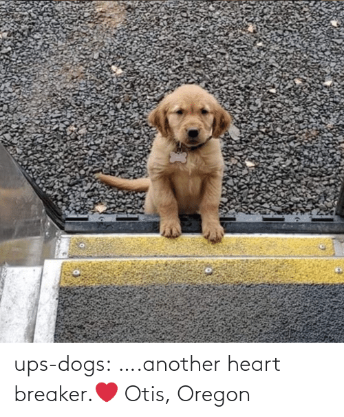 breaker: ups-dogs:  ….another heart breaker.❤ Otis, Oregon