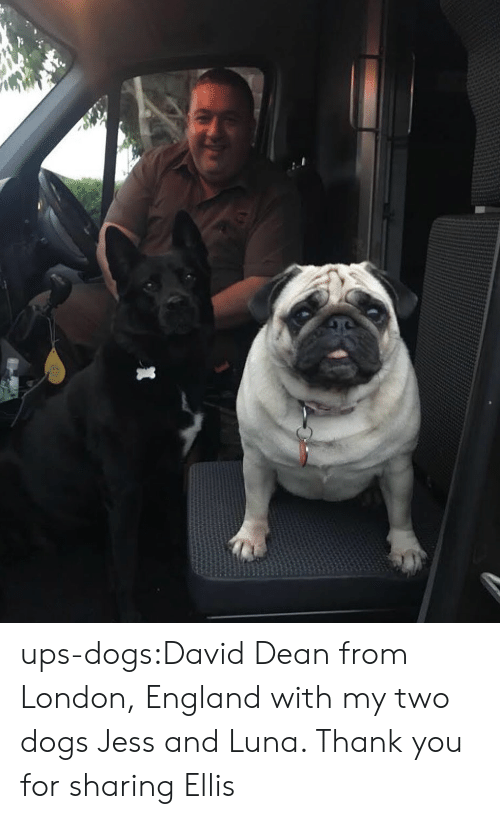 Dogs, England, and Target: ups-dogs:David Dean from London, England with my two dogs Jess and Luna. Thank you for sharing Ellis