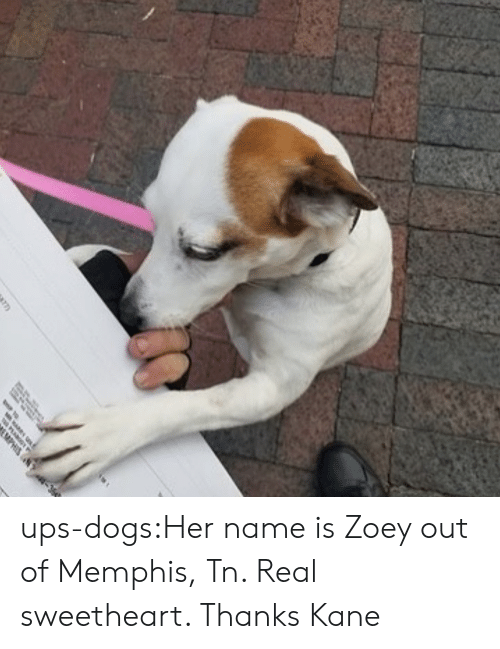 kane: ups-dogs:Her name is Zoey out of Memphis, Tn. Real sweetheart. Thanks Kane