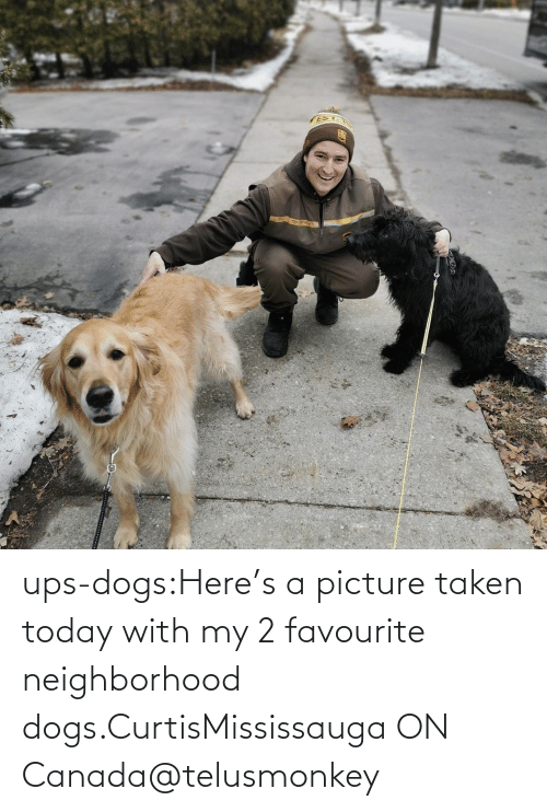 2: ups-dogs:Here's a picture taken today with my 2 favourite neighborhood dogs.CurtisMississauga ON Canada@telusmonkey