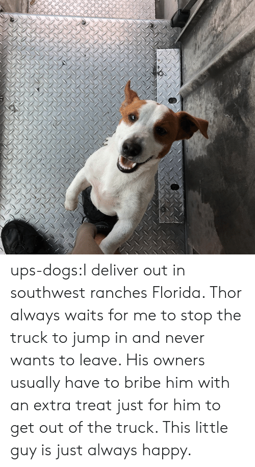 Dogs, Target, and Tumblr: ups-dogs:I deliver out in southwest ranches Florida. Thor always waits for me to stop the truck to jump in and never wants to leave. His owners usually have to bribe him with an extra treat just for him to get out of the truck. This little guy is just always happy.