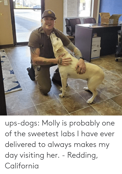 probably: ups-dogs:  Molly is probably one of the sweetest labs I have ever delivered to always makes my day visiting her.- Redding, California